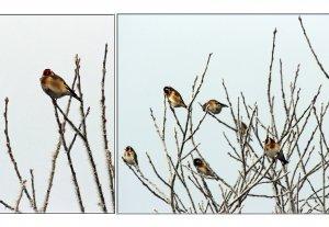 (meine)Vögel.jpg